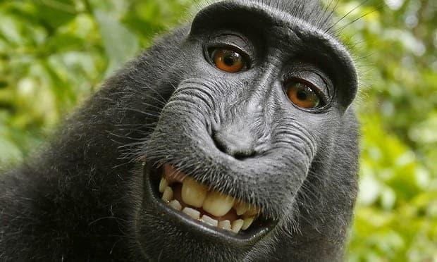 Monkey PR Photographer